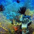 coral_sea-1