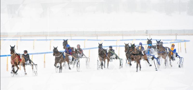 2016 White Turf St. Moritz -February 2016