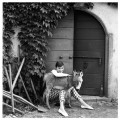 NPG x30114; Audrey Hepburn by Norman Parkinson