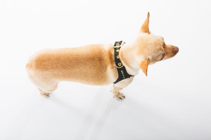 Brikk -Lux Buddy Belt Dog Harness Gold and Diamond Dog Harness--