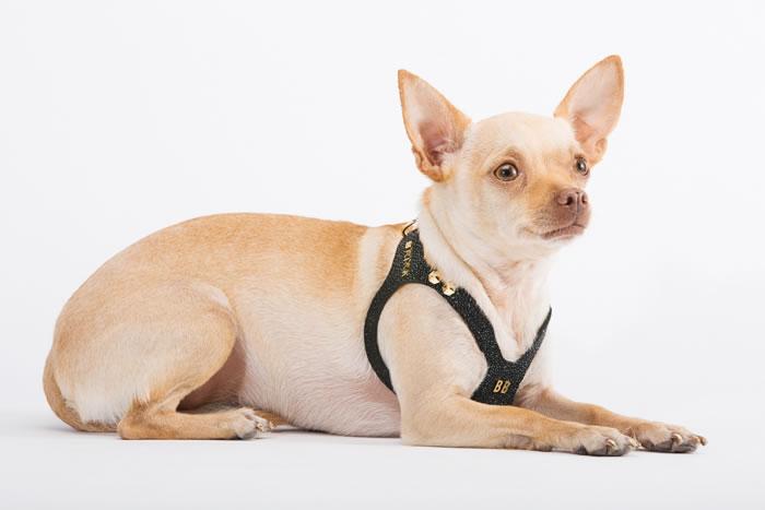 Brikk -Lux Buddy Belt Dog Harness Gold and Diamond Dog Harness