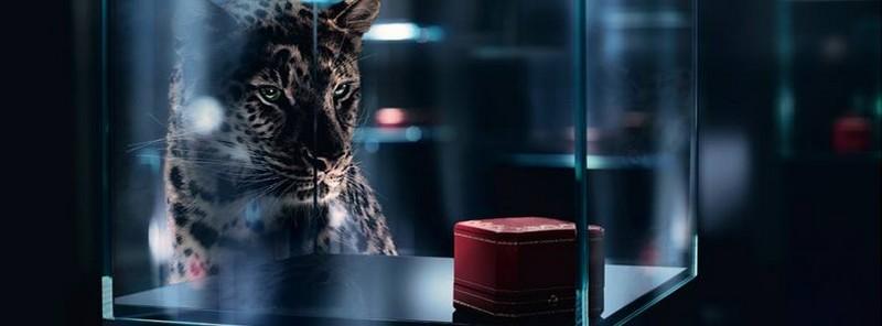 Cartier etourdissant  -