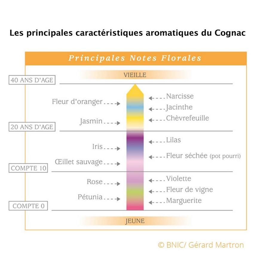 Cognac aromatique notes