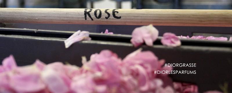 Dior at Grasse