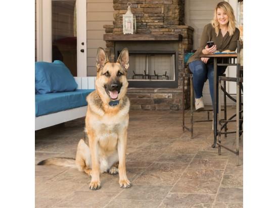dog-training-goes-digital-dog-training-app-and-colar