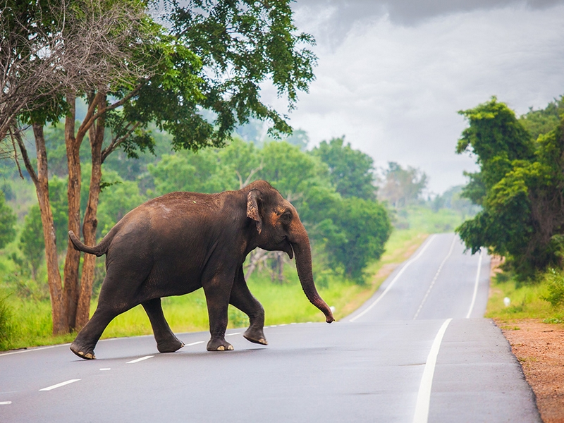 elephants-on-the-road