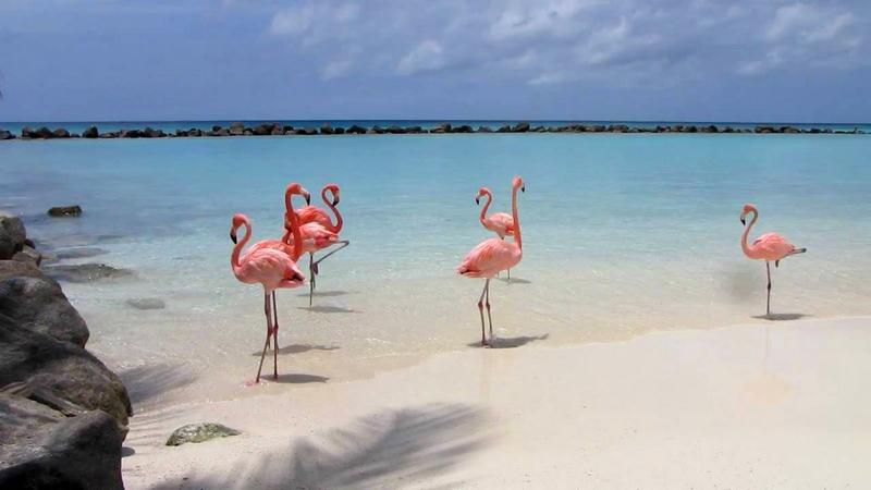 FlamingosAruba