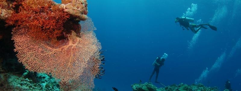Four Seasons Private Island Maldives at Voavah, Baa Atoll- diving