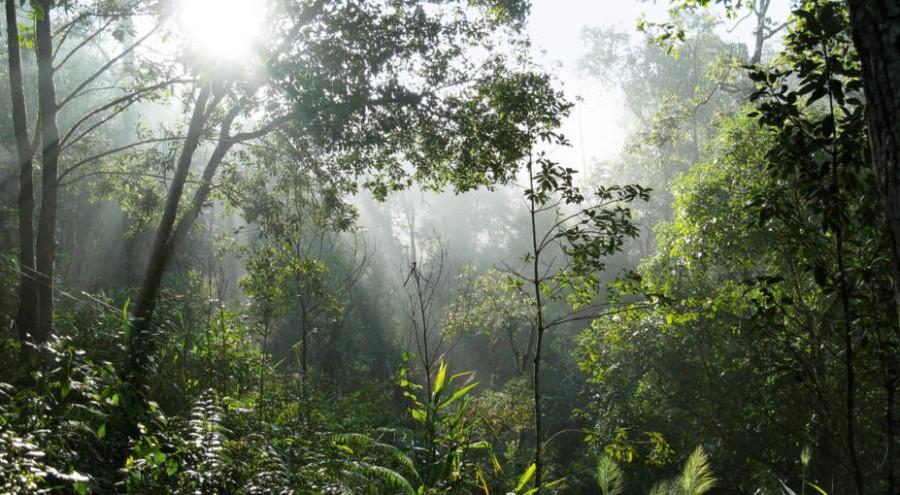 Guerlain the TianZi nature reserve