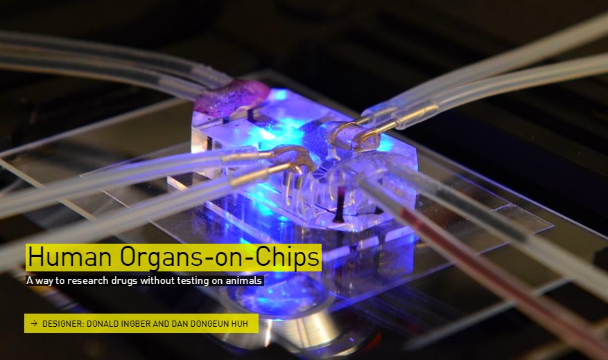 Human Organs on chips - The Designs of the Year 2015 nominees @ Design Museum London
