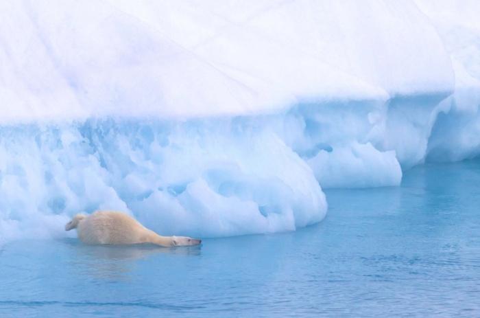International Polar Day 2015