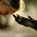 Jane Goodall - goodall-touch
