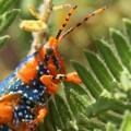Kakadu National Park insects