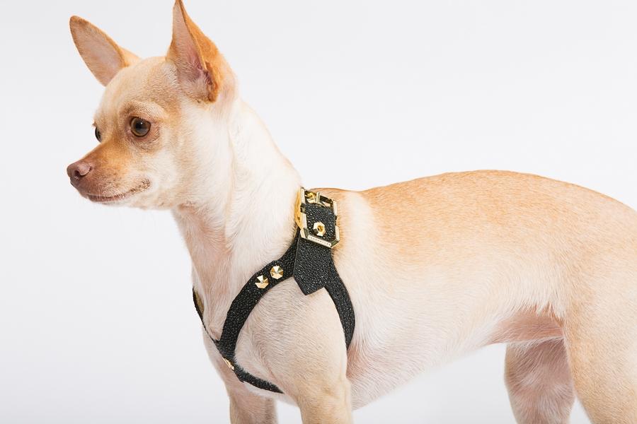 Lux Buddy Belt Dog Harness Gold and Diamond Dog Harness