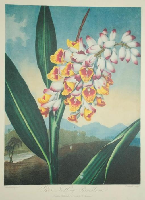 Métiers d'Art Florilège – RENEALMIA WATCH
