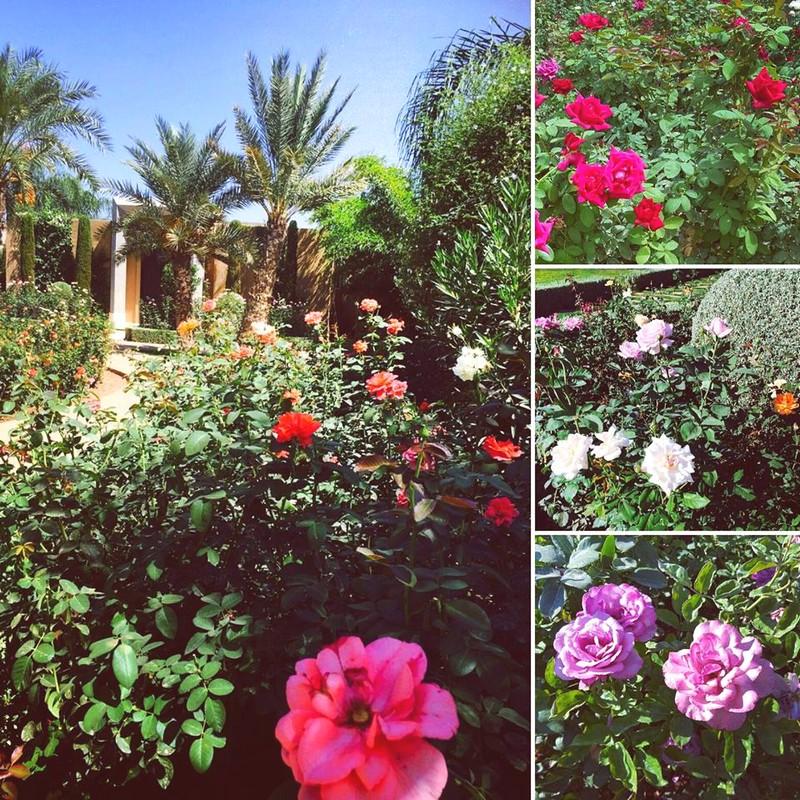Mandarin Oriental Marrakech - 100 000 roses