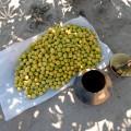 Marulagreennuts