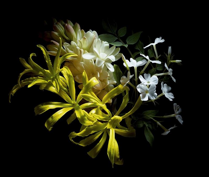 McQueen Parfum - The signature scent for women.