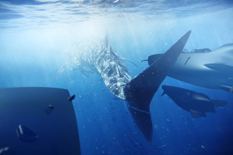 Ortega submersibles - marine animals