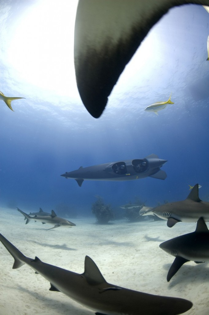 Ortega submersibles - sharks
