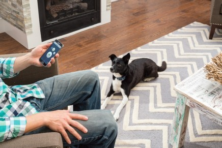 How to Teach Your Dog Good Manners. Dog Training Goes Digital