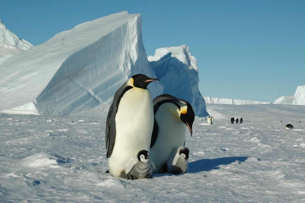 protective-parents-whichaway-camp-in-antarctica
