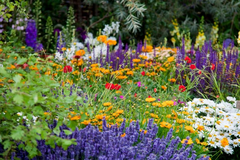 RHS - Royal Horticultural Society 2015
