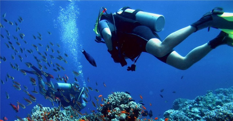 Sardinial attractions-Sardegna diving
