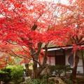 Suiran Luxury Hotel Kyoto