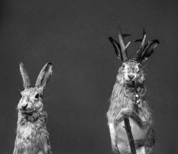 The Hasselblad Masters - Become a Master of Photography-vol 4-Hasselblad Master 2014 Wildlife