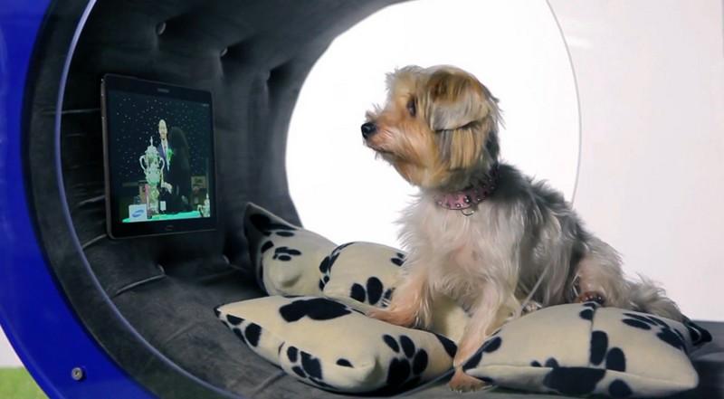 The Samsung Dream Doghouse 2015-