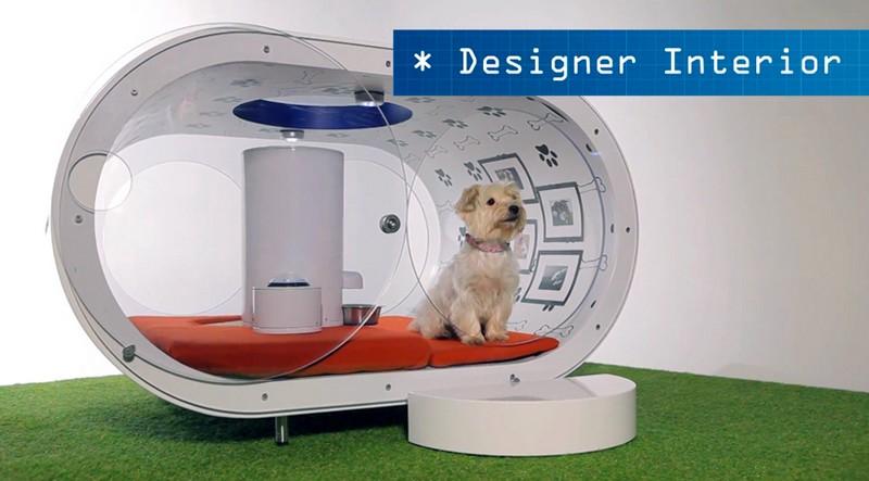 The Samsung Dream Doghouse 2015