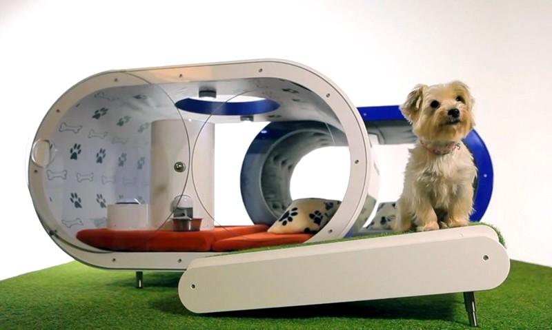 The Samsung Dream Doghouse