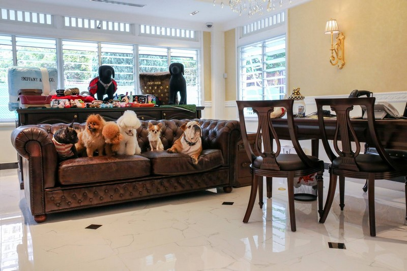 The Wagington Pet Hotel Lobby