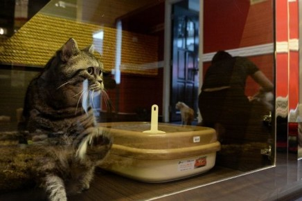 Purr-Fection Feline Suites offered at the luxurious Wagington Singapore