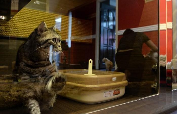 The Wagington Pet Hotel  Purrfection-