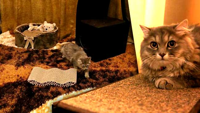 Purr Fection Feline Suites Offered At The Luxurious