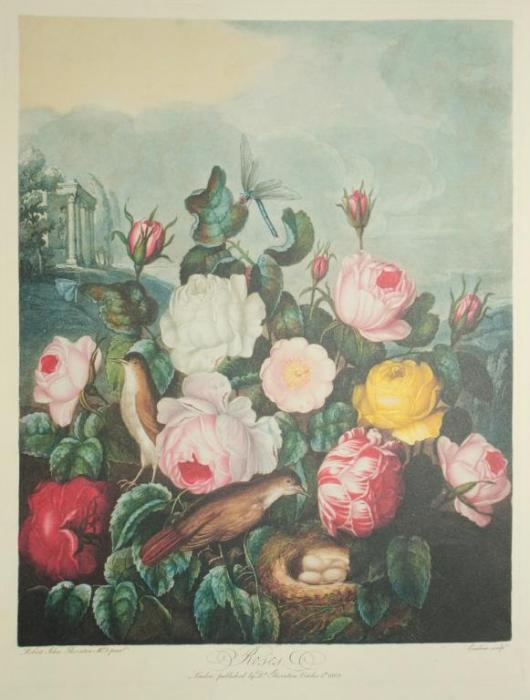 Vacheron Constantin Métiers d'Art Florilège – ROSE CENTIFOLIA WATCH