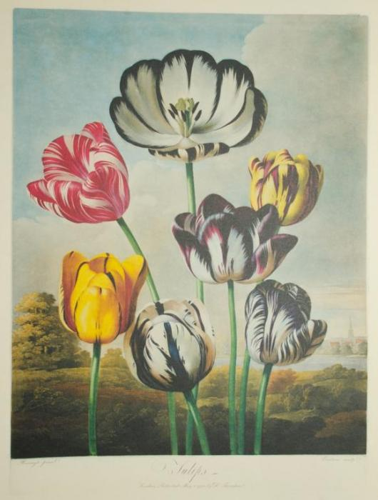 Vacheron Constantin Métiers d'Art Florilège – Tulip Watch 2015