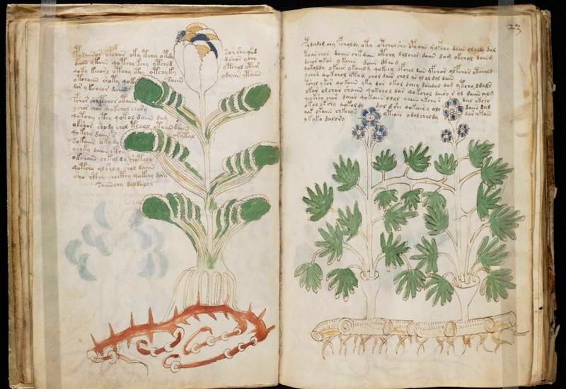 Voynich Manuscript-book-