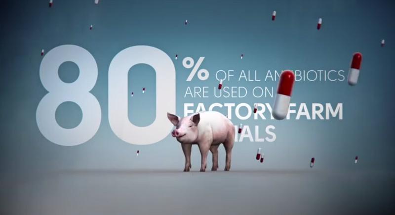 antibiotics farm animals