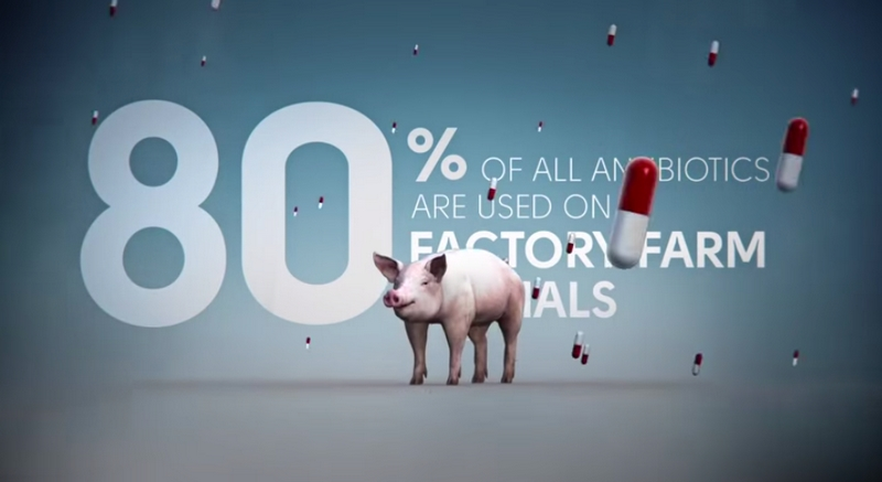 antibiotics farm animals