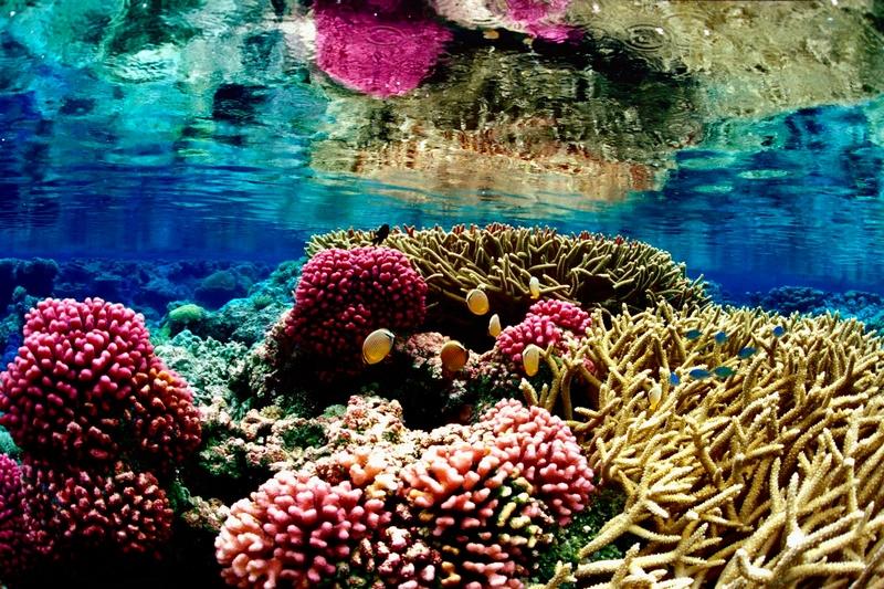 corals barrier