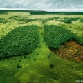 deforestation and lungs