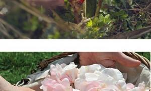 diorflowergardenforperfumes