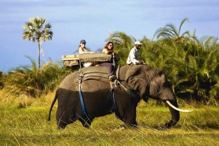 TripAdvisor bans ticket sales to attractions that allow contact with wild animals