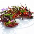 geranium restaurant copenhagen menu