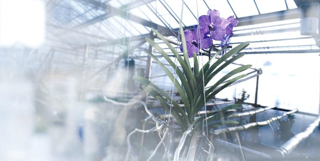 guerlain orchidarium research--
