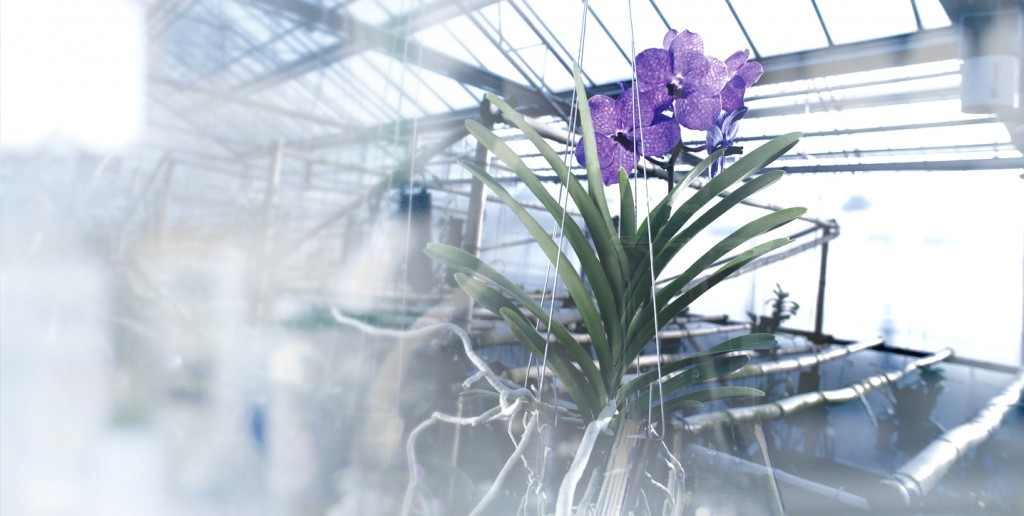 guerlain orchidarium research--