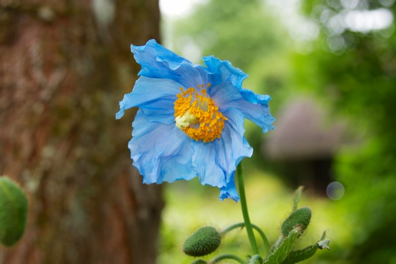 leckford estate gardens-